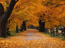 autumn-leaves-by-muskurahatdotus